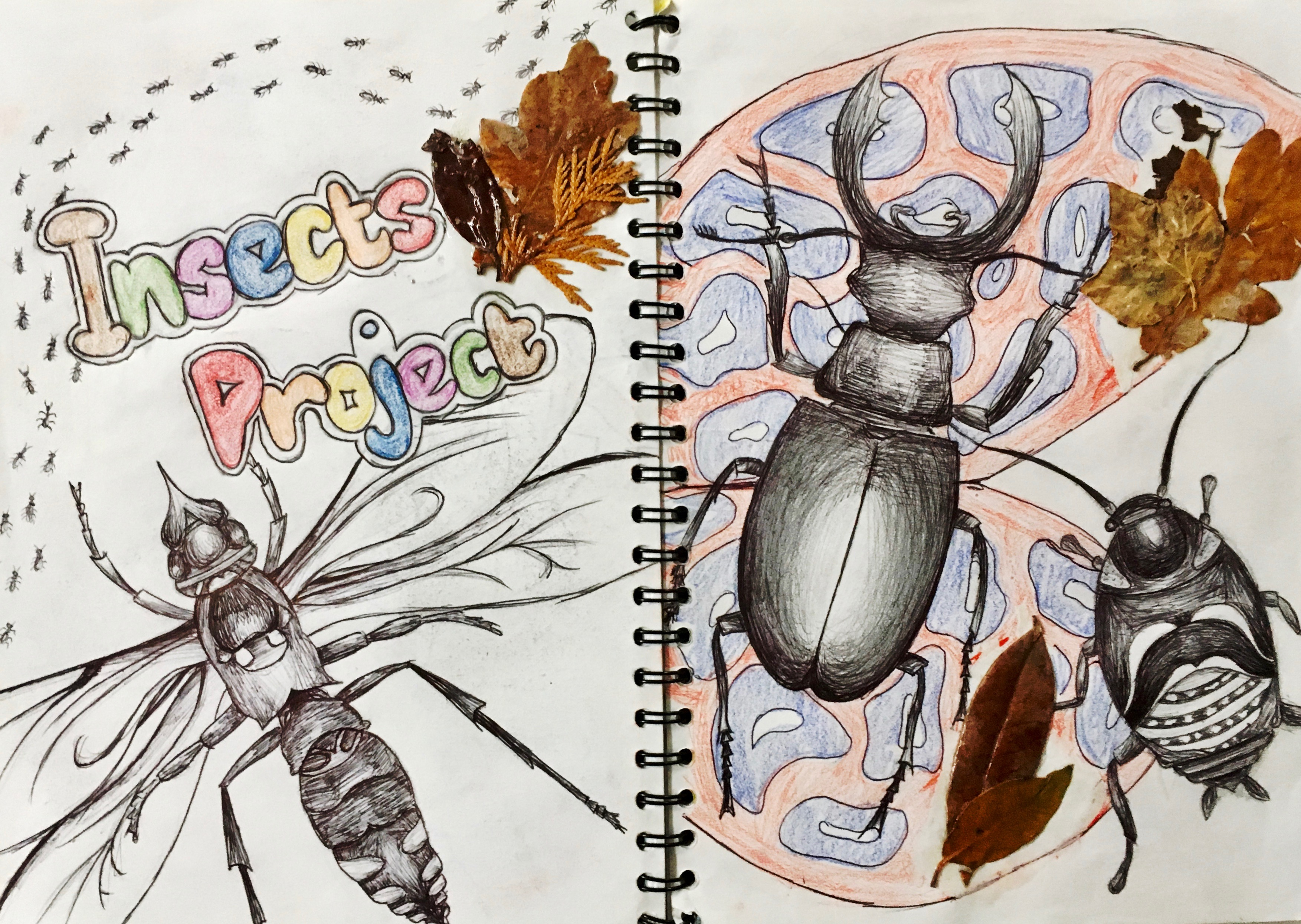 Year 9 Insects