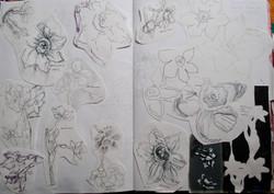 Natural Forms Studies