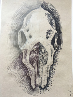 Observational Skull exemplar