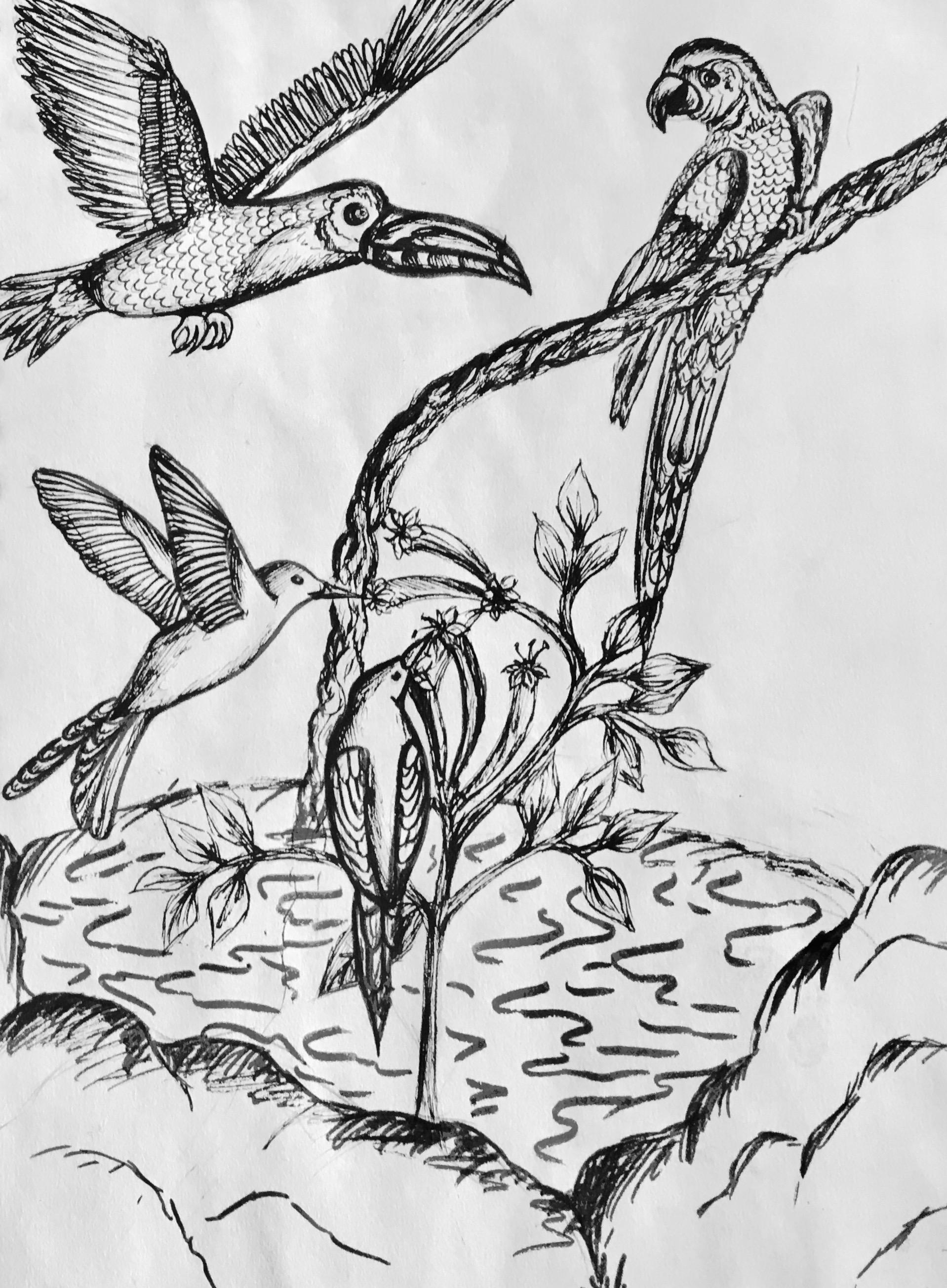 Year 8 Birds