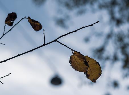 Herfst op het Spui