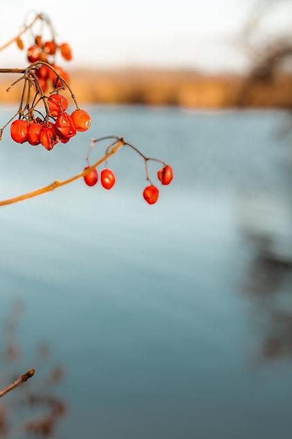 herfst-6834.jpg