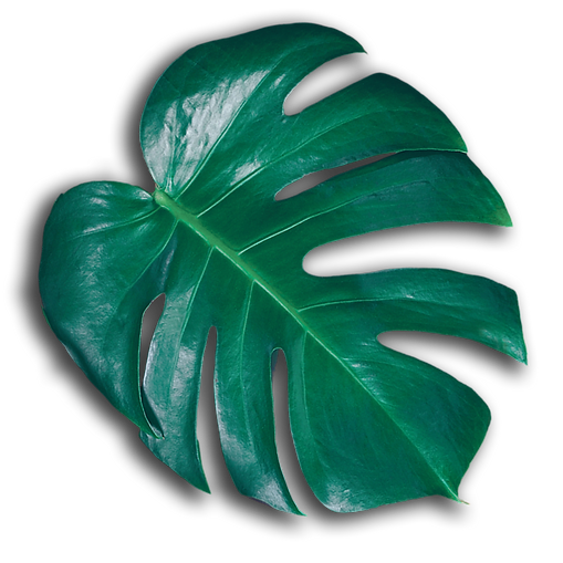 leaf_solo_edited_edited.png