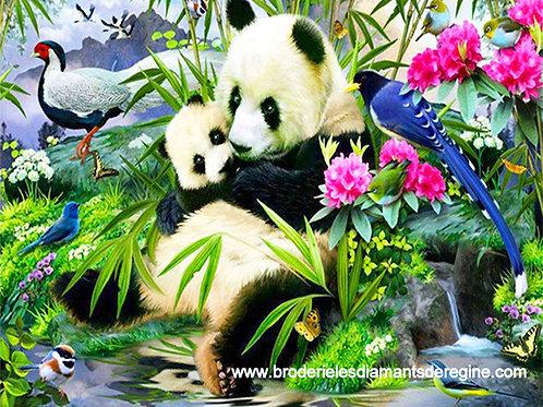 Panda et son petit