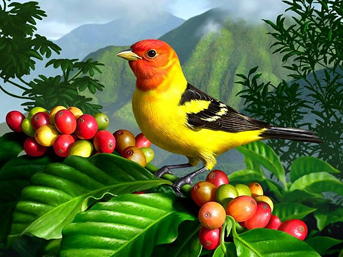 le magnifique oiseau
