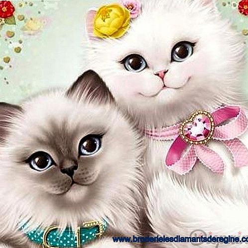 les deux beaux petits chats