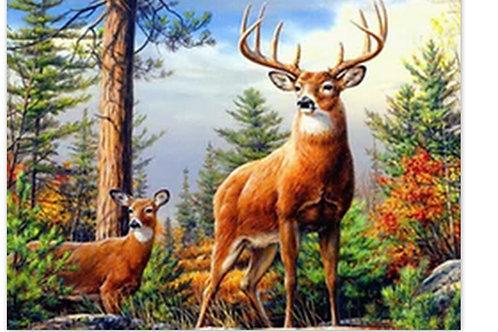 le cerf et la biche dans la forêt