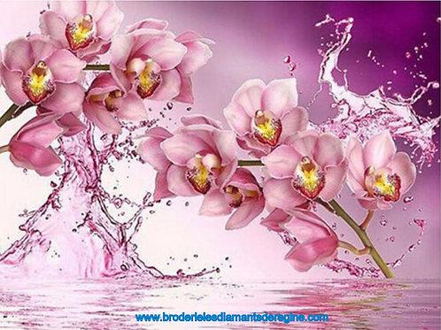 Explosion d'orchidées