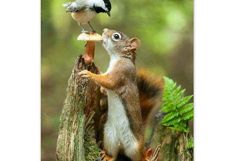 L'écureuil et l'oiseau