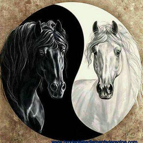 les deux chevaux blanc et noir