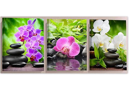 3 tableaux orchidées