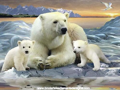 ours blanc et ses deux petits