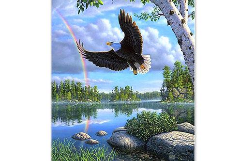 Le vol de l'aigle arc en ciel