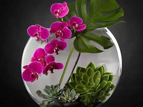 le bocal orchidée, plantes