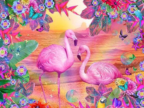 le couple de flamants roses