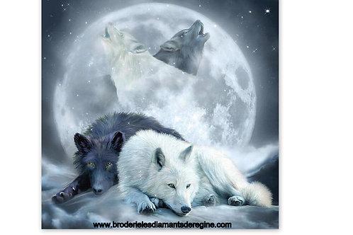les deux loups blanc et noir