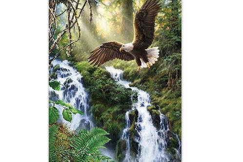 Aigle et cascade