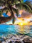 coucher de soleil sous les palmiers 50 x 40 cm.jpg