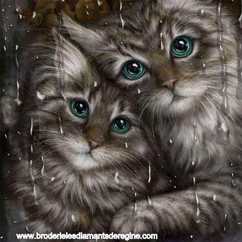 les chatons qui regardent la pluie