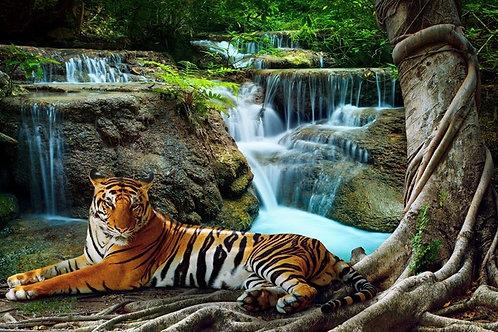 le repos du tigre et cascade