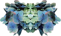 hortensias.png