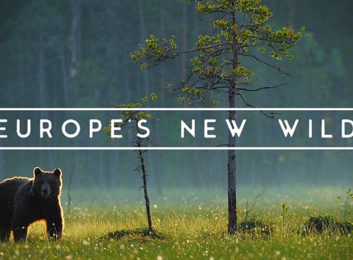 Goda nyheter: En ny dokumentär lyfter fram vilda djurs återhämtning i Europa