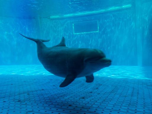 Indonesien förbjuder resande cirkus med delfiner