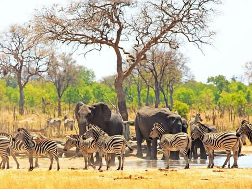 Goda nyheter: Zimbabwe förbjuder brytning av kol i landets nationalparker