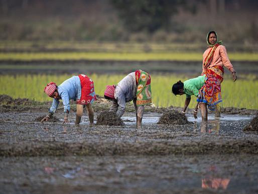 I Indien visar kvinnor vägen till ett hållbart jordbruk och jämställda samhällen