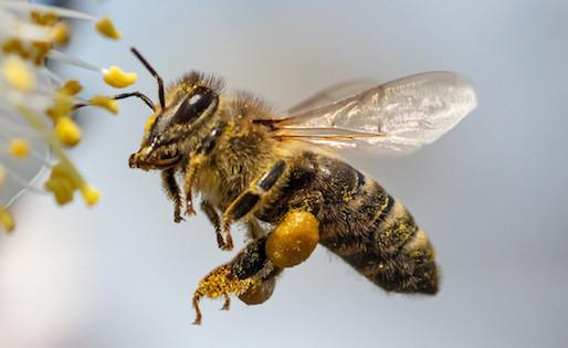 Blomrabatter lockar bin till Münchens tidigare insektsglesa gator