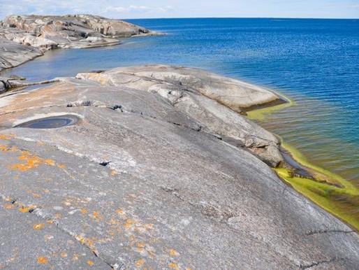 Goda nyheter: Sveriges största marina reservat invigdes
