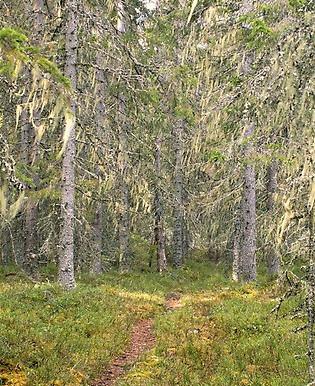 Unik natur i Dalarna skyddas