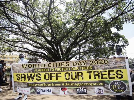 Goda nyheter: Ett hundraårigt fikonträd i Kenya ska få leva vidare