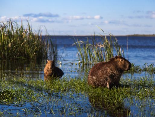 Inspiration: Ett mycket inspirerande videoklipp om återställandet av naturen