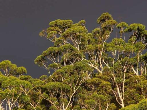 Allt fler länder tar hänsyn till naturen i sina ekonomiska beslut