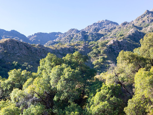 Goda nyheter: Stor nationalpark i Argentina fördubblas i storlek