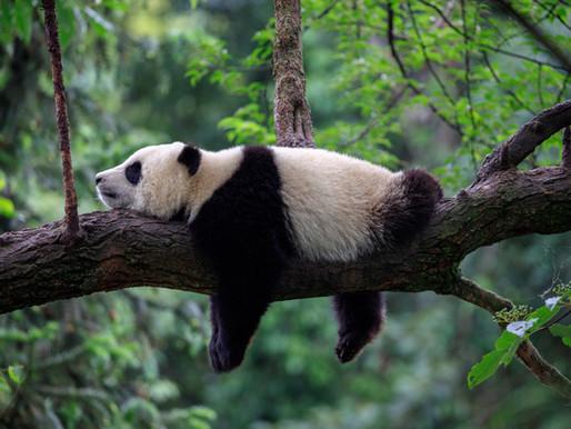 Goda nyheter: Kina skapar tio nya nationalparker