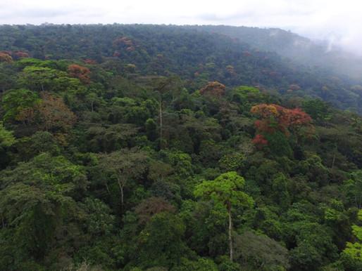 Goda nyheter: Stora internationella tillverkare ifrågasätter exploatering av unikt naturområde
