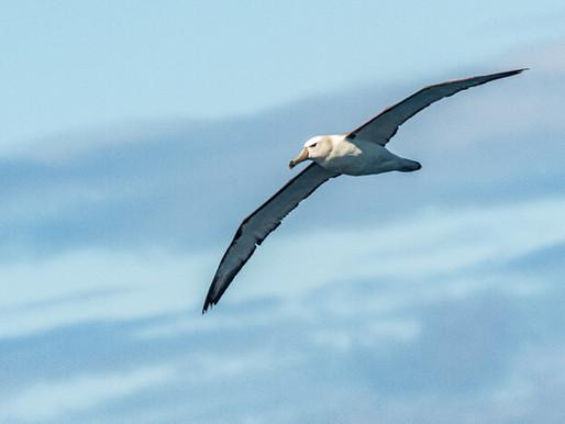 Goda nyheter: Namibias fiskeindustri minskar mängden döda sjöfåglar med 98 %