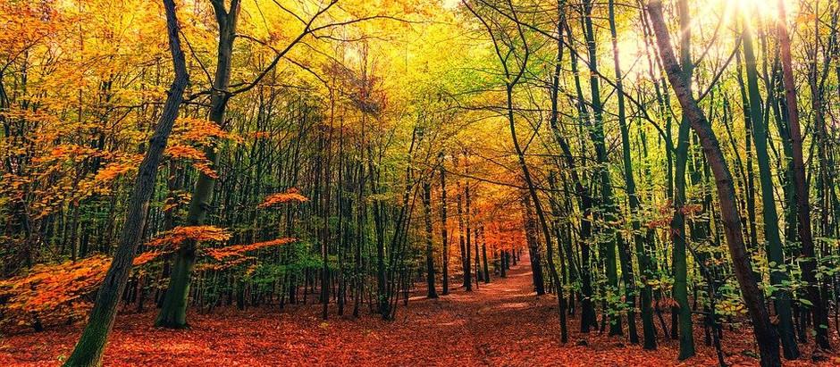 Vivre l'automne en forme