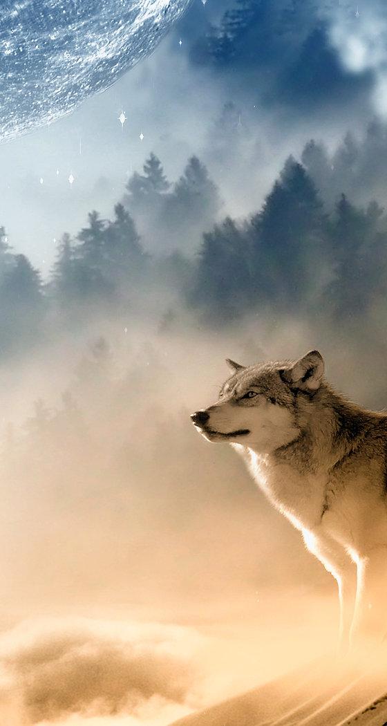 wolves-1400819.jpg