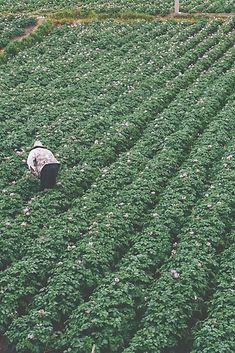Farming-Dali-WOW (1).jpg