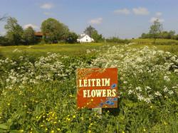 Leitrim Flowers