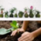 keiken_sq_planting.png