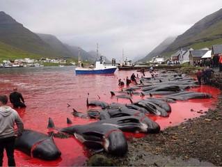 Mar de sangre