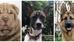 ¡Adivina cuál de estas mascotas es Olivia Goldstein!