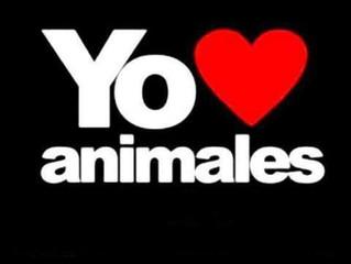 """""""Amo a los animales, pero no puedo dejar de comer huevo"""""""