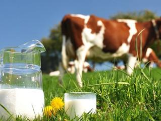 Productos lácteos: ¡bonita manera de disfrazar el veneno!