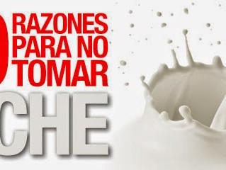 La leche de vaca es vida solamente para el ternero; para la especie humana es la muerte lenta y dolo
