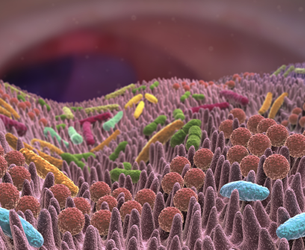 L'intestin et son «microbiote»
